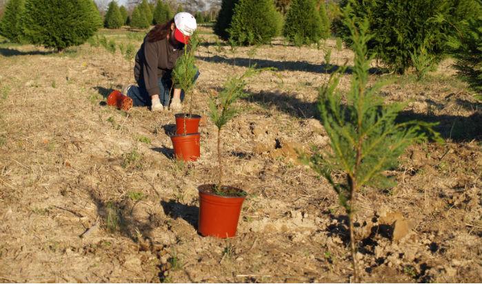 Lisa-planting-2