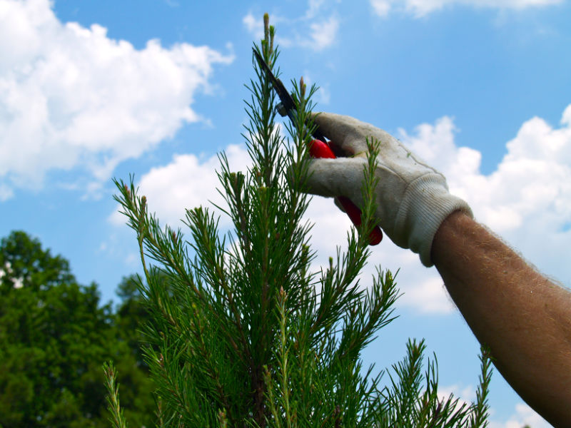 Web---hand-pruning