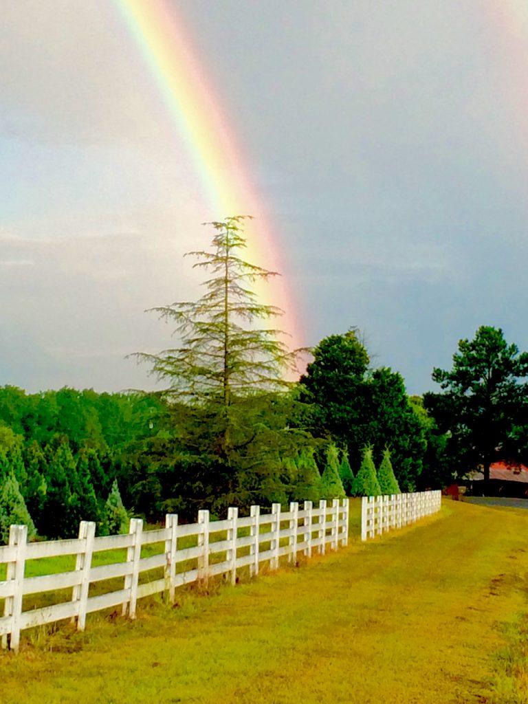 FarmScape Rainbow Deodara Fence